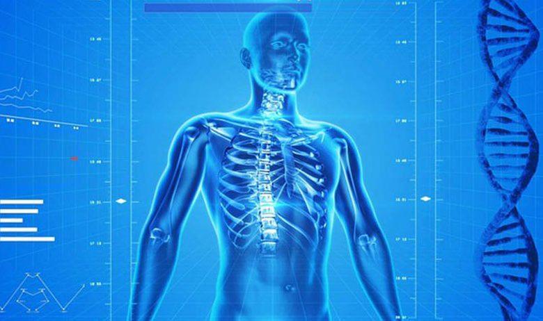24 واقعیت شگفت انگیز درباره بدن انسان