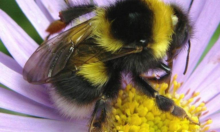 نقش کلیدی زنبور عسل در بقای بشر | زنبور | نقش زنبور عسل بر کشاورزی | نقش زنبور عسل در محیط زیست