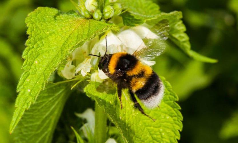نقش کلیدی زنبور عسل در بقای بشر