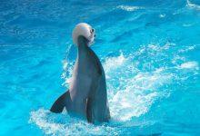 تصویر از دلفین ها در کمال ناباوری مخدر میزنند