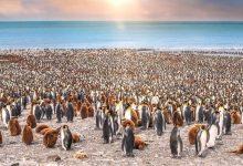 تصویر از شگفتی های پنگوئن ها