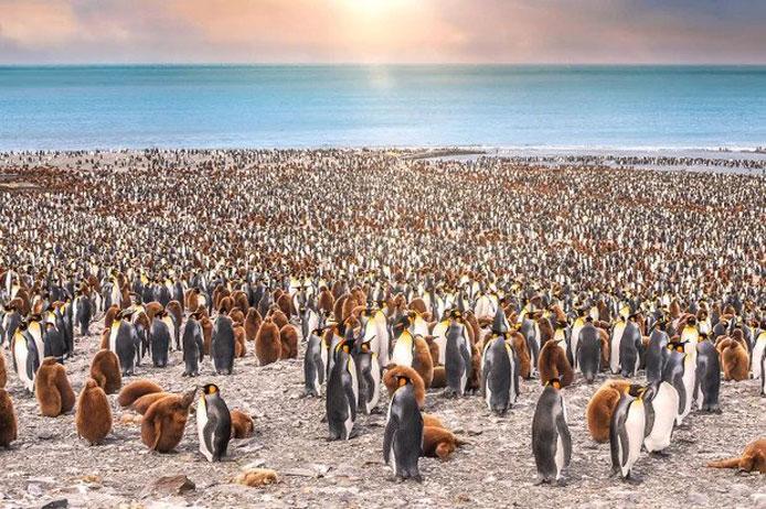 شگفتی های پنگوئن ها