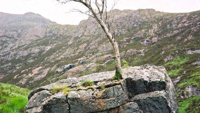تصویر از رشد درخت از دل سنگ