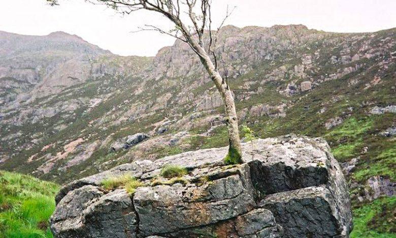 رشد درخت از دل سنگ