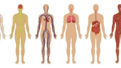 تصویر از 18 شگفتی بدن انسان
