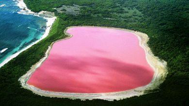 تصویر از دریاچه صورتی هیلیر : دریاچه صورتی استرالیا و داستان پشت آن